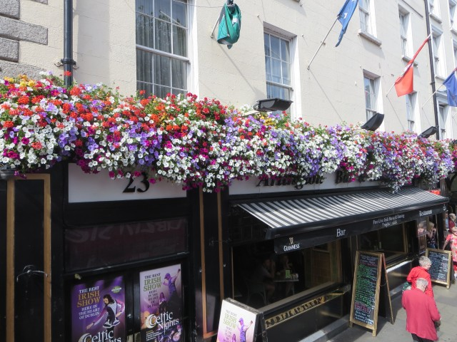 2143 Dublin pubs and flowers