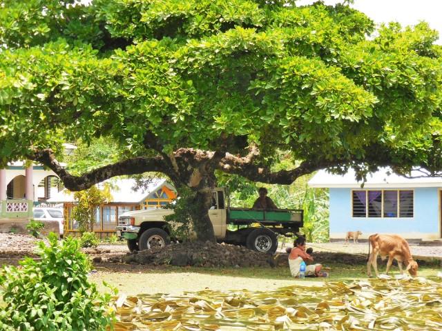 Apia Samoa 18