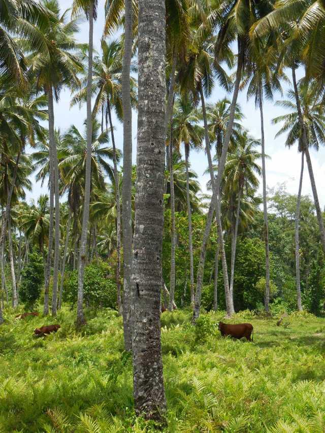 Apia Samoa 8