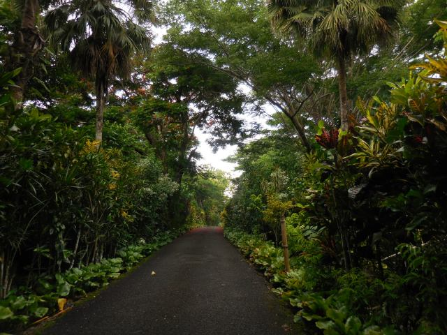 Apia Samoa - road to Robert Louis Ss house