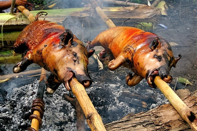 2 pigs on spit