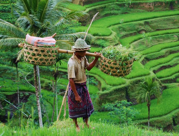 rice field worker 2